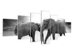 Obraz - černobílí sloni (V020398V210100)