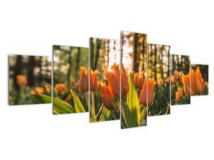 Obraz - oranžové tulipány (V020552V210100)