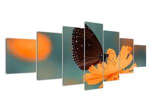 Obraz - motýl na oranžové květině (V020577V210100)