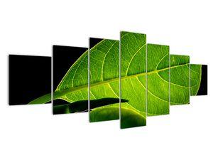 Obraz - zelený list (V020628V210100)