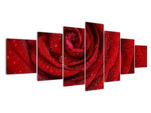 Obraz - detail růže (V020684V210100)