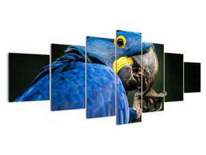 Obraz papouška (V020714V210100)