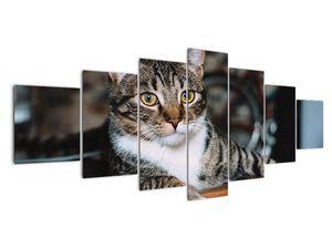 Obraz kočky (V020889V210100)