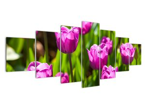 Obraz tulipánov na lúke (V020893V210100)