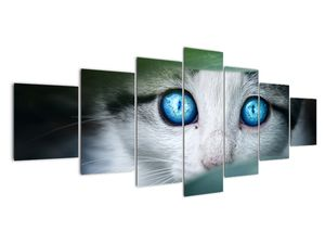 Obraz kočky (V020944V210100)