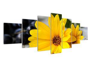 Obraz žluté květiny (V020952V210100)