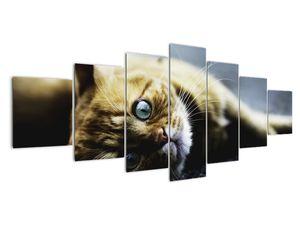 Obraz kočky (V020963V210100)