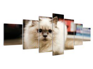 Obraz bílé kočky (V021124V210100)