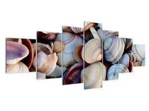Kagyló képe (V021131V210100)