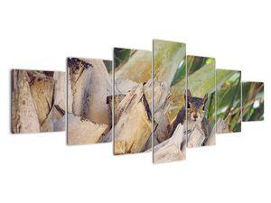 Obraz veverky na stromu (V021177V210100)