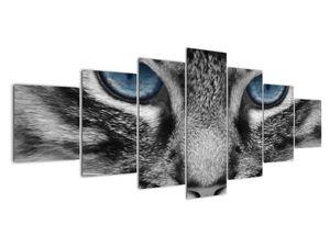 Obraz kočky (V021221V210100)
