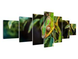 Obraz chameleona (V021236V210100)