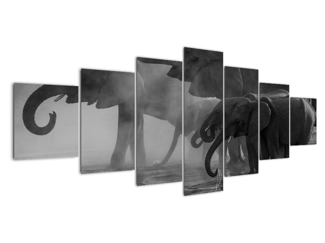 Obraz slonů - černobílý (V021575V210100)