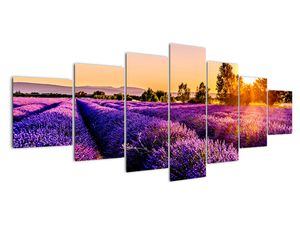 Obraz levandulového pole, Provence (V021590V210100)