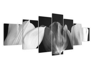Kép - fekete-fehér tulipán virág (V021916V210100)