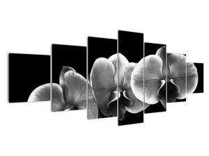 Obraz květu orchideje (V022015V210100)