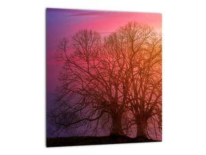 Obraz stromů v mlze (V020088V3030)