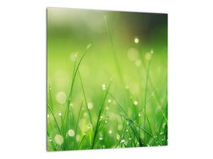 Obraz - rosa na trávě (V020169V3030)