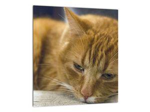 Obraz mačky (V020192V3030)