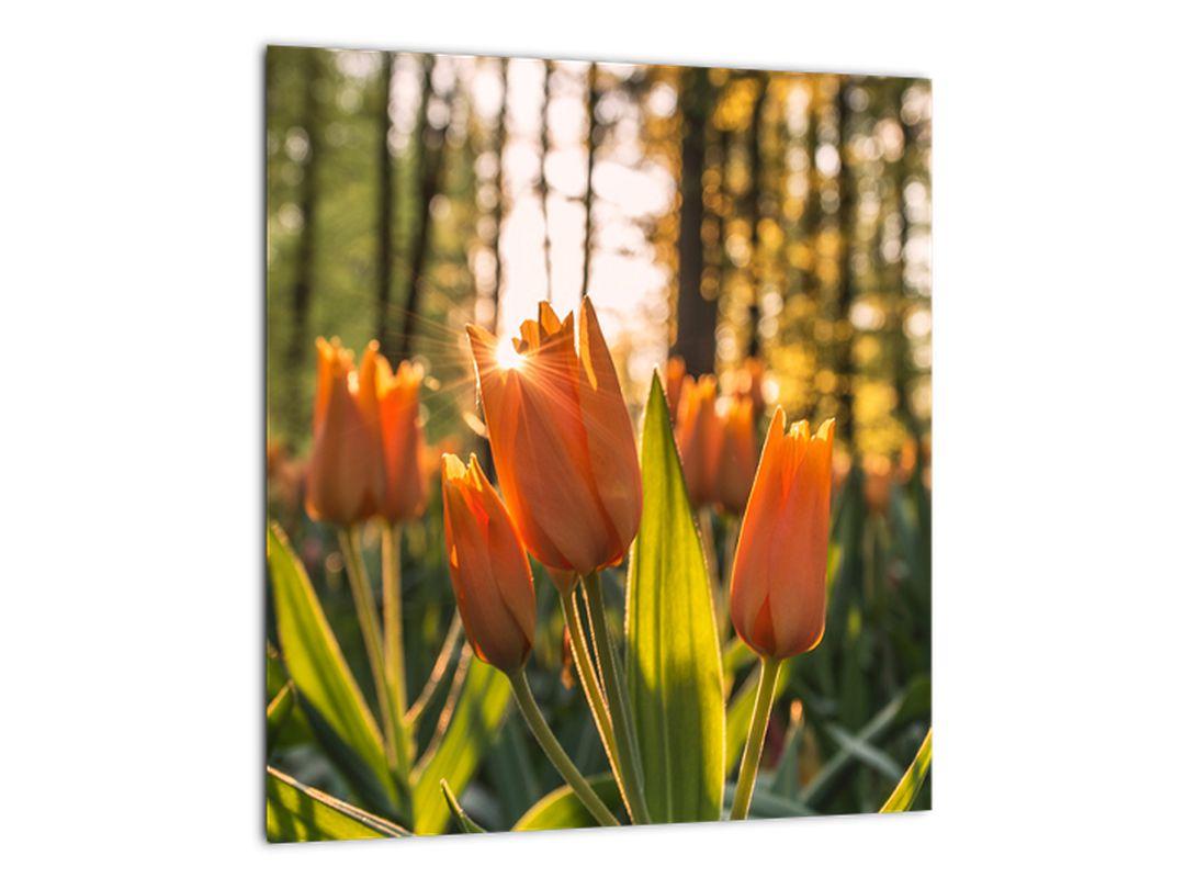 Obraz - kvety tulipánov (V020195V3030)