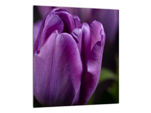 Obraz květů tulipánů (V020215V3030)
