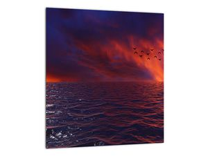 Obraz moře s ptáky (V020351V3030)