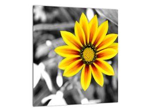 Obraz žluté květiny (V020361V3030)