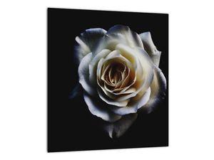 Obraz bílé růže (V020370V3030)