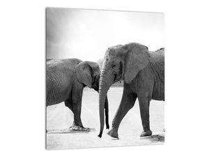 Obraz - černobílí sloni (V020398V3030)
