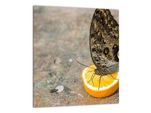 Obraz motýla (V020454V3030)