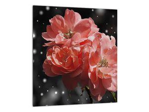 Obraz růžové květiny (V020471V3030)