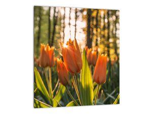 Obraz - oranžové tulipány (V020552V3030)