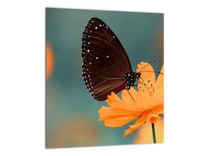 Obraz - motýl na oranžové květině (V020577V3030)