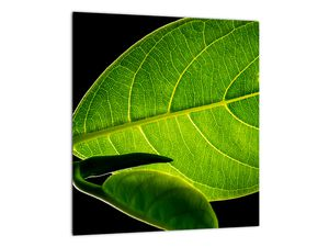 Obraz - zelený list (V020628V3030)
