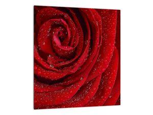 Obraz - detail růže (V020684V3030)