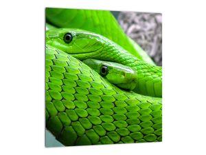 Obraz zelených hadů (V020689V3030)
