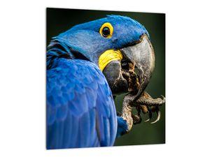 Obraz papouška (V020714V3030)