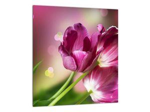 Obraz růžových tulipánů (V020887V3030)
