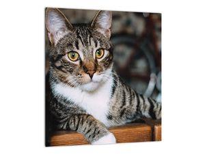 Obraz kočky (V020889V3030)