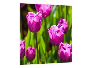 Obraz tulipánov na lúke (V020893V3030)