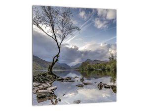 Obraz řeky se stromem (V020917V3030)