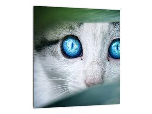 Obraz kočky (V020944V3030)