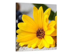 Obraz žluté květiny (V020952V3030)
