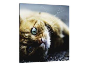 Obraz kočky (V020963V3030)