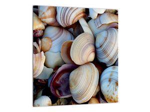Kagyló képe (V021131V3030)