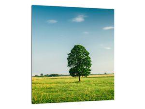 Obraz stromu na louce (V021171V3030)