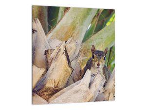 Obraz veverky na stromu (V021177V3030)