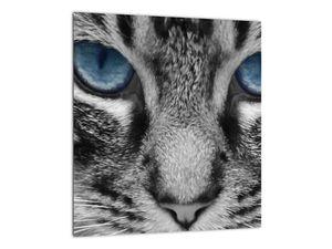 Obraz kočky (V021221V3030)