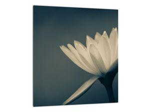 Obraz květiny (V021223V3030)