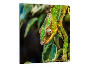 Obraz chameleona (V021236V3030)